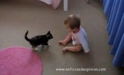 Humor - Videos graciosos - bebe y gatito jugando